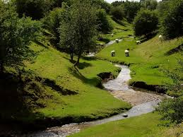 EDL pix sheep and verdant hillside stream